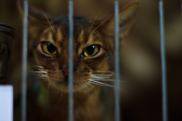 An animal rescue charity has enlisted the help of prisoners. Image: